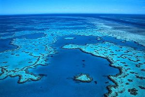 The Great Barrier Reef Is Truly A Special Place